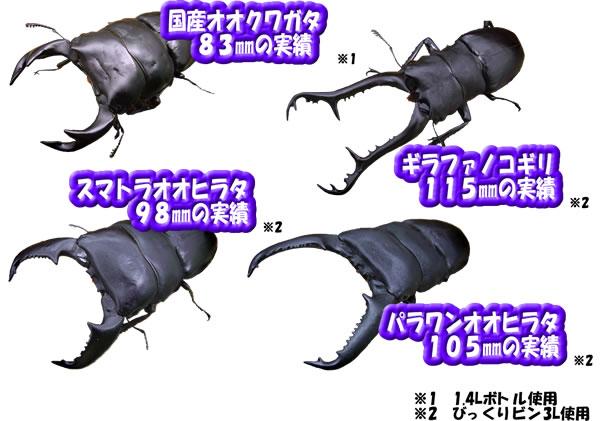 オオヒラ茸詰替DH菌床 3.5Lブロック