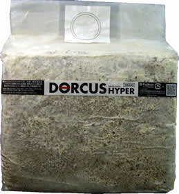 オオヒラ茸詰替DH菌床 3.5Lブロック 12個セット