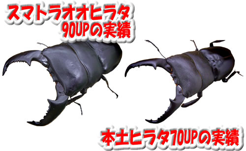 スーパーSP発酵 50L(10L×5)