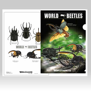 昆虫クリアファイル カブトムシ