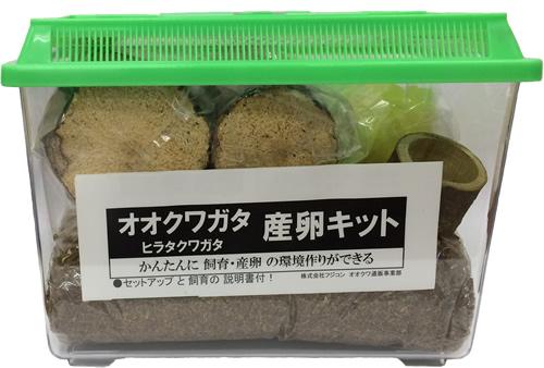 ■オオクワガタ産卵キット