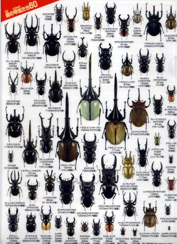 NEW■森の甲虫たち60 クリアファイル