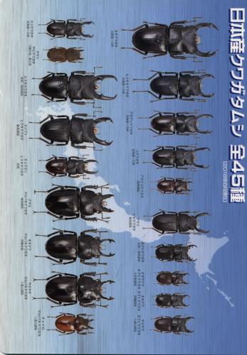 ビークワ下敷き 日本のクワガタムシ全45種