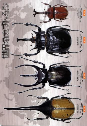 ビークワ下敷き 世界のカブトムシ