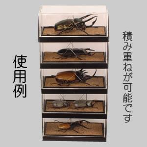 標本コレクターズケースS