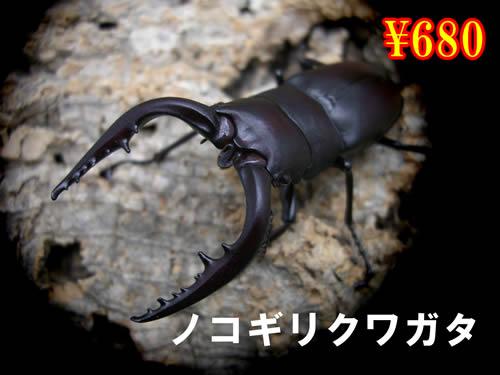 特選虫の市■国産ノコギリクワガタ成虫ペア(2ペアまで