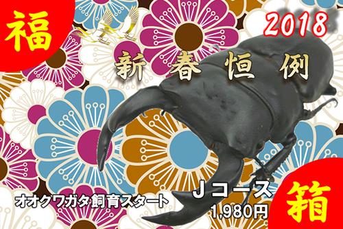 福箱★Jコース オオクワガタ飼育スタート