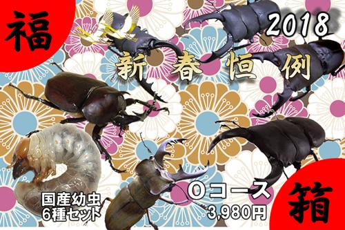 福箱★Oコース 国産幼虫 6種