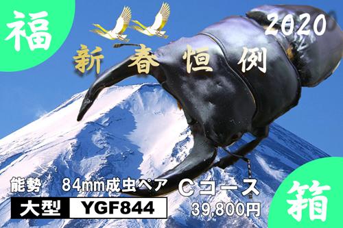 福箱★Cコース 【YGF844】血統 84mm成虫ペア
