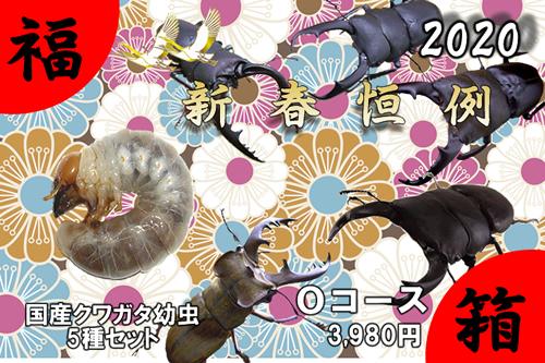 福箱★Oコース 国産クワガタ幼虫5種