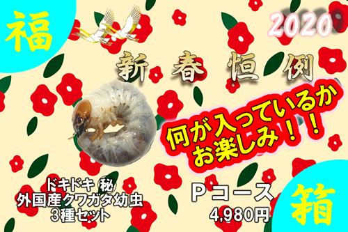 福箱★Pコース ドキドキ○秘外産クワガタ幼虫3種